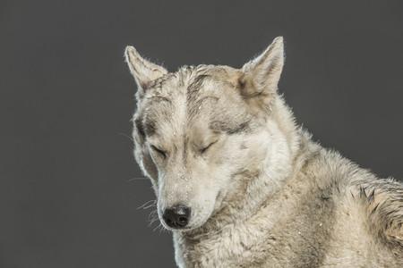 Dog Daze 56