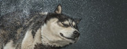 Dog Daze  61