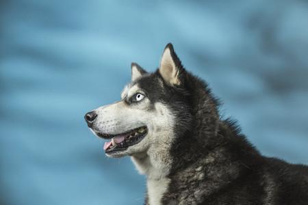 Dog Daze 63