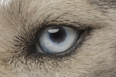 Dog Daze 76