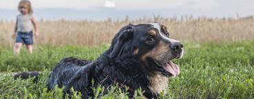 Dog Daze  77