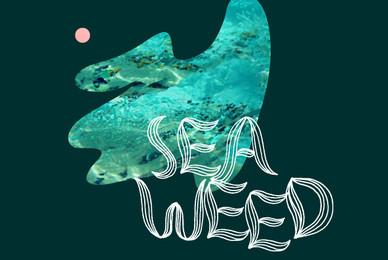 YWFT Seaweed