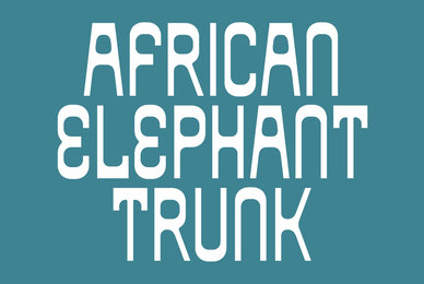 African Elephant Trunk