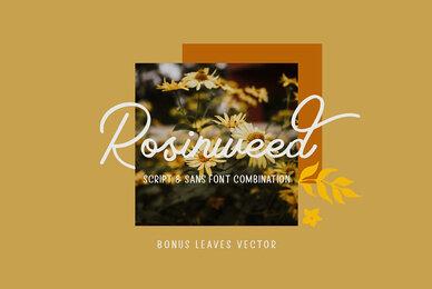 Rosinweed Font Duo