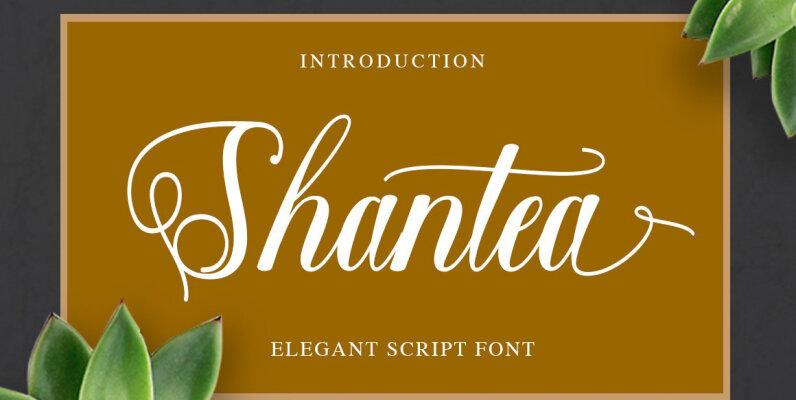 Shantea