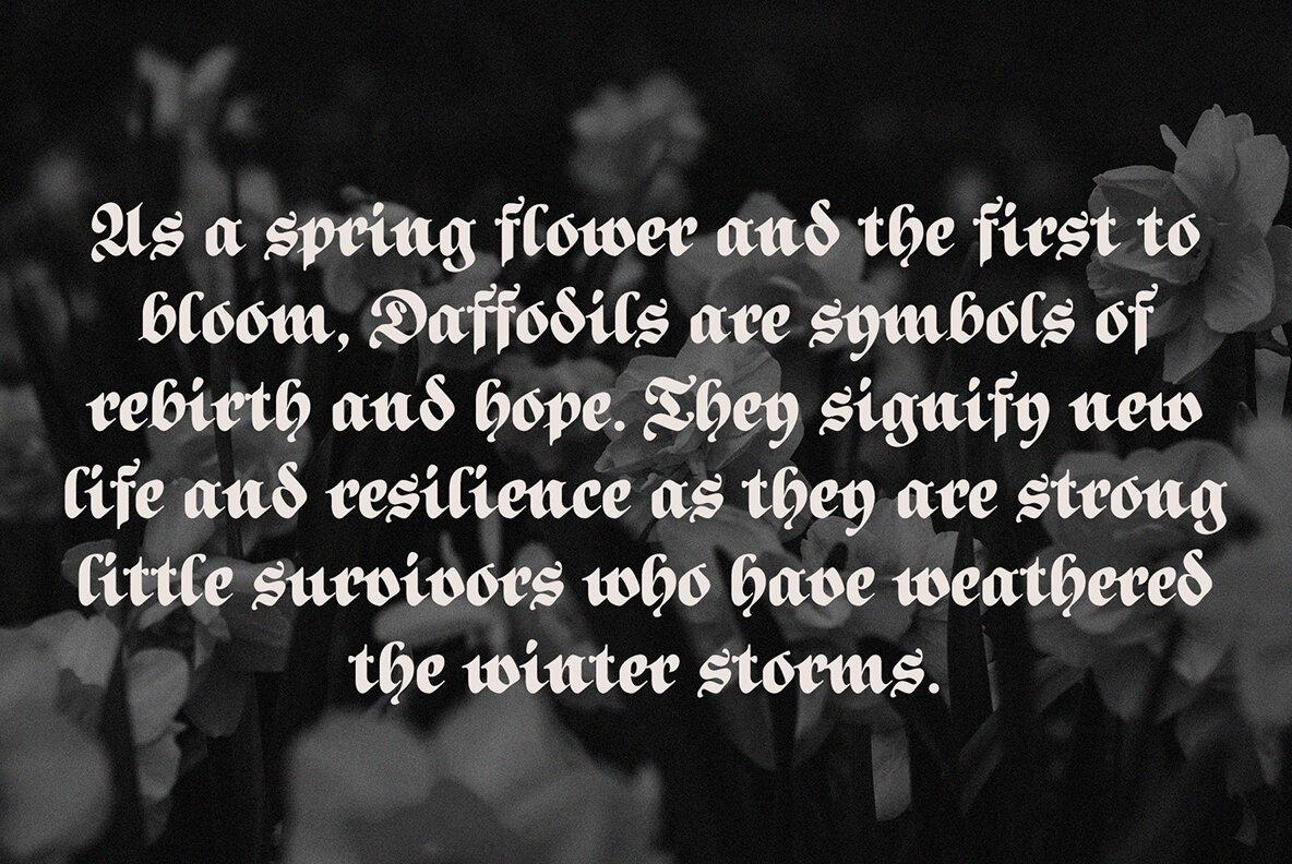 ED Daffodil