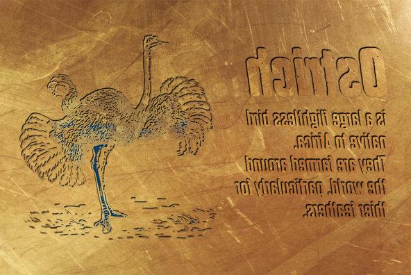 Dharma Gothic P