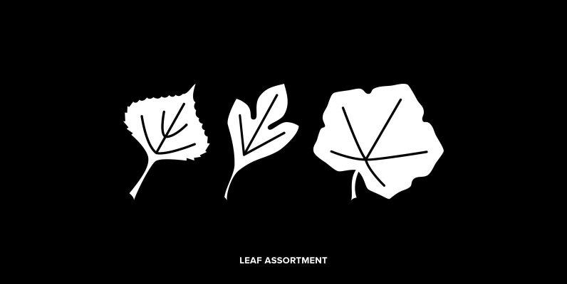 Leaf Assortment