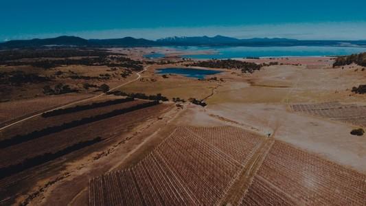 Vineyard Flyover