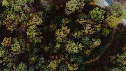 Forest Landing
