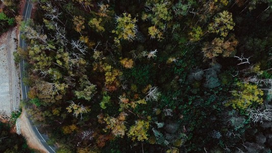 Forest Flyover via Drone 2