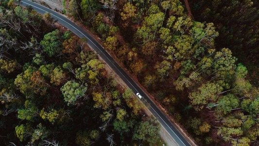 Forest Flyover via Drone