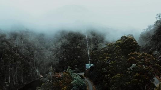Misty Forest Flight