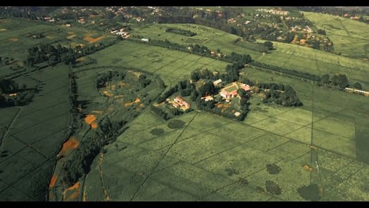 Tea Farm 4