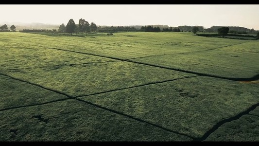 Tea Farm 5