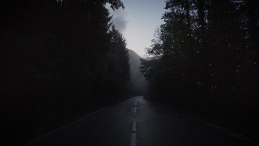 Dark Forest Road