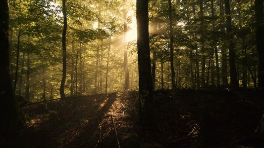 Forest Light Rays