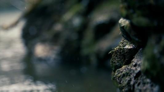 Moss Rocks Side