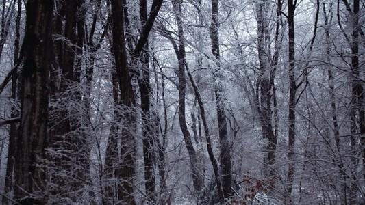 Snowfall 01