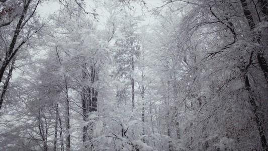 Snowfall 05