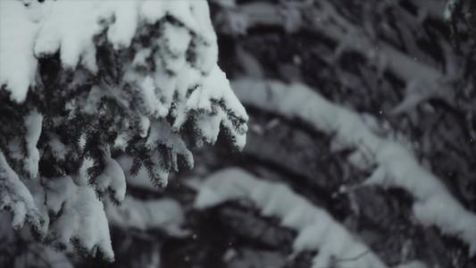 Snowfall 08