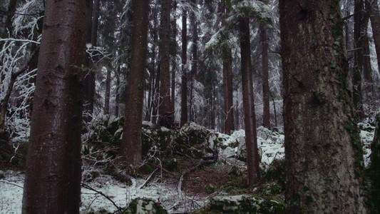 Snowfall 09