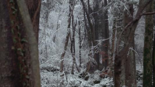 Snowfall 11