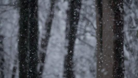 Snowfall 12