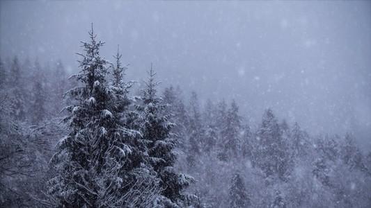 Snowfall 14