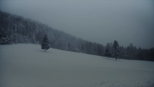Snowfall 13