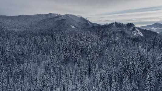 Endless Winter Forest