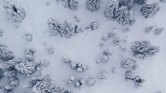 Pristine snowy forest aerial