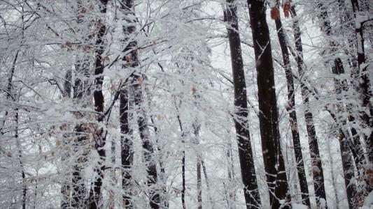 Snowfall 15