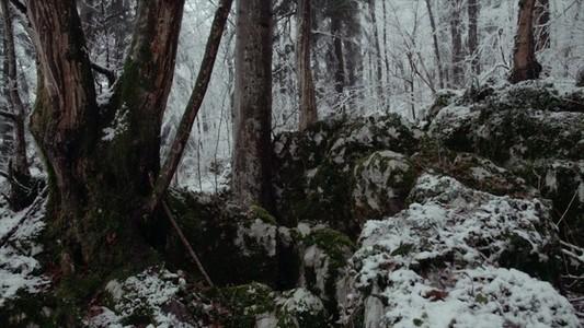 Snowfall 16