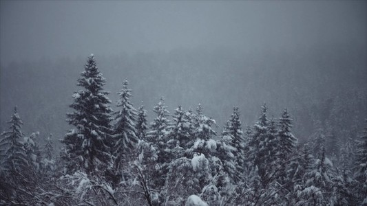 Snowfall 17