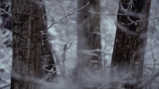 Snowfall 18