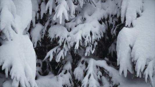 Snowfall 19