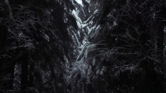 Snowfall 20