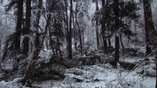 Snowfall 21