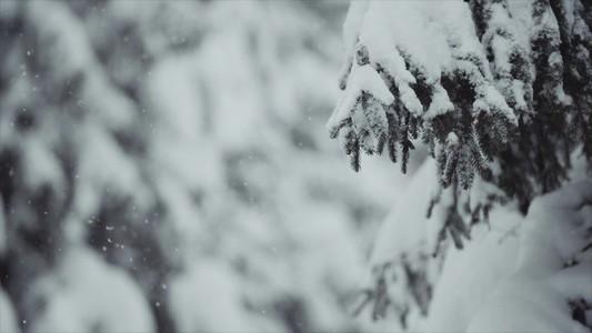 Snowfall 22