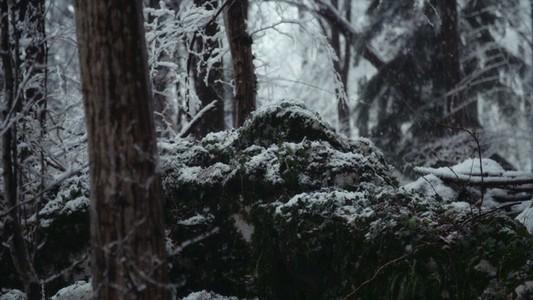 Snowfall 25