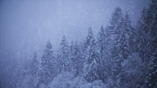 Snowfall 29