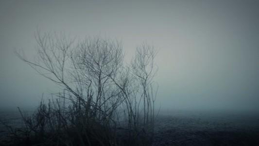 Nomad Barren Field Bushes