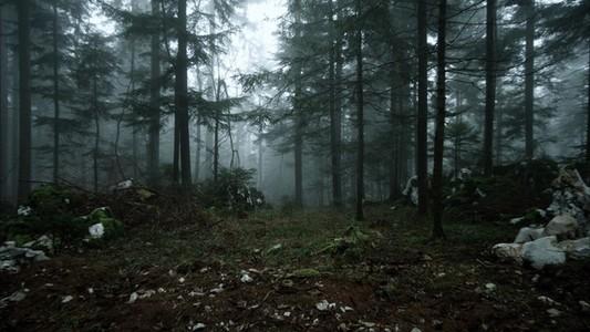 Nomad Forest Snow Melt