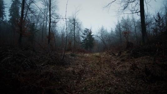 Nomad Misty Woods