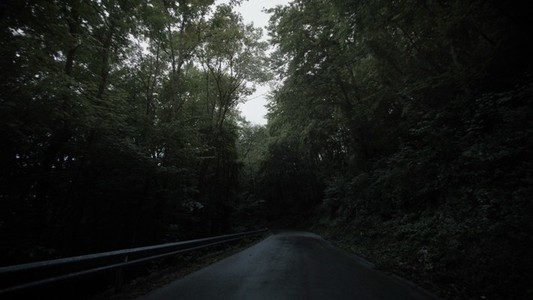 Nomad Wet Forest Road