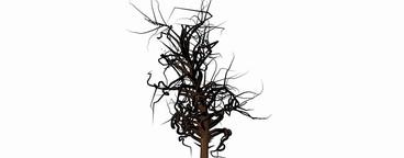 Growing Tree 03