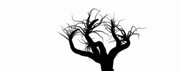 Growing Tree 07
