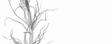 Growing Tree 09