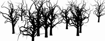 Growing Tree 10